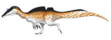 Reconstruction of the spinosaurid genus Ichthyovenator in a left-facing walking pose