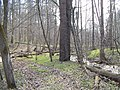 In a forest - panoramio.jpg