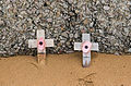 In remembrance poppies Omaha Beach.jpg