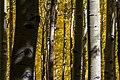 Inner Basin Trail No. 29 (29530986024).jpg