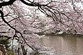 Inokashira Park (3446853204).jpg