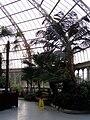 Internal, Palm House, Sefton Park (1).jpg