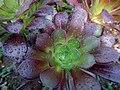 "Iran-qom-Cactus-The greenhouse of the thorn world گلخانه کاکتوس ""دنیای خار"" در روستای مبارک آباد قم- ایران 14.jpg"