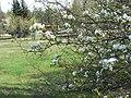 Irkutsk. Akademgorodok. Spring - panoramio (4).jpg