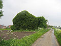 Ivy-covered house, Kirton Holme, Lincs - geograph.org.uk - 172794.jpg