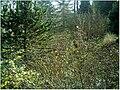 January Frost Botanic Garden Freiburg - Master Botany Photography 2014 - panoramio (25).jpg