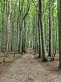 Jasmund National Park 18.jpg