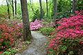 Jenkins Arboretum - DSC00569.JPG