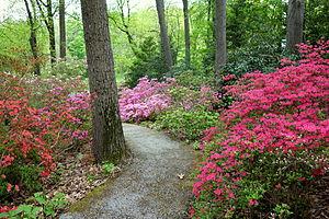Image of Jenkins Arboretum: http://dbpedia.org/resource/Jenkins_Arboretum