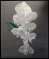 Jesse Waugh - Cascading Orchids.png