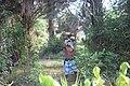 Jeune transportant des fagot de boie5.jpg