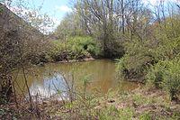 Johns Creek (Oostanaula River), March 2017.jpg