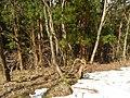 Kamishiro, Hakuba, Kitaazumi District, Nagano Prefecture 399-9211, Japan - panoramio (29).jpg
