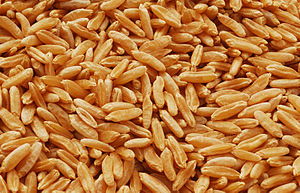 Kamut grain.jpg