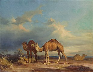 Camels in a Southern Landscape