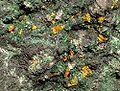 Kasolite-Malachite-171771.jpg