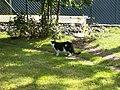 Katter (6061864863).jpg