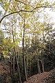 Kattoudhia-Mylikouri Nature Trail - panoramio (2).jpg