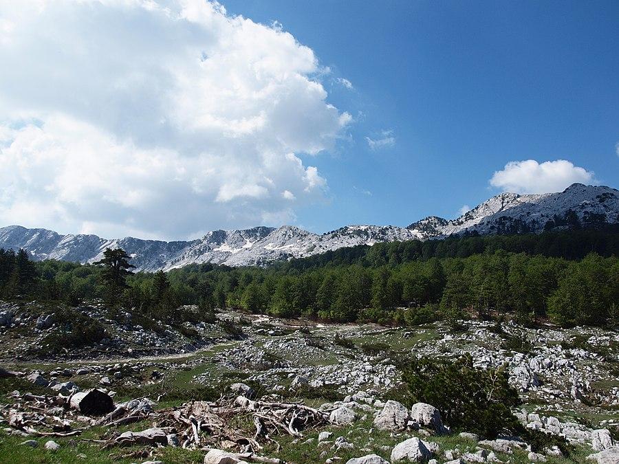 Bijela gora
