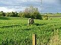King's Stone - geograph.org.uk - 9266.jpg