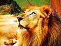 King and God - panoramio.jpg