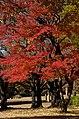 Kinuta Park - panoramio.jpg