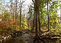 Kisco River Stream Shot.jpg