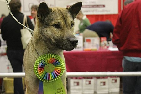 Kishu Ken at Dog Show.jpg