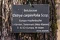 Klagenfurt Villacher Vorstadt Botanischer Garten Hopfenbuche Tafel 18012018 09353.jpg