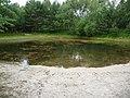 Kleiner See im Wald - panoramio.jpg