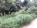 Kobe Municipal Arboretum in 2013-6-22 No,111.JPG