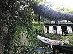 Koinobori on Narrow Path of Cats in Onomichi, Hiroshima.jpg