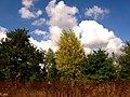Kolomyya, Ivano-Frankivs'ka oblast, Ukraine - panoramio (6).jpg