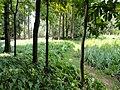 Kunming Botanical Garden - DSC02936.JPG
