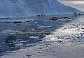 L'iceberg si sbriciola - panoramio.jpg