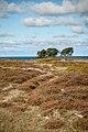 Læsø - panoramio - L-BBE (11).jpg