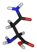 3D structure of Asparagine