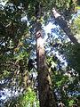 La Amistad Panama Biosphere Reserve - Parque Nacional Volcan Baru (a core zone) 31.JPG