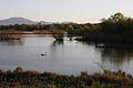 Lago di Alviano2.JPG
