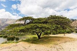 Laguna de Yahuarcocha, La Dolorosa del Priorato, Ecuador, 2015-07-21, DD 30.JPG