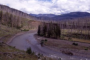 Lamar River - The Lamar River in 1998 showing trees burned in the 1988 wildfires