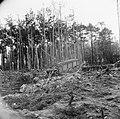 Lanceerinstallatie van Duitse V-1 raketten bij Almelo (Paradijsbos), Bestanddeelnr 900-2482.jpg