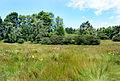 Landscape by Boleboř village 2.jpg