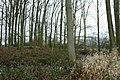 Landschap De Stroopers te Kemzeke - 372043 - onroerenderfgoed.jpg