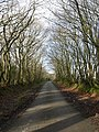 Lane on Tregeare Down - geograph.org.uk - 718960.jpg