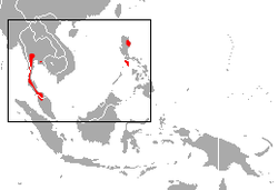 Large Asian Roundleaf Bat area.png