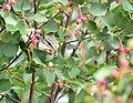 Least chipmunk on Seedskadee National Wildlife Refuge (35229200004).jpg