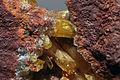 Legrandite, limonite, adamite 1100-1-FS2014 1.jpg