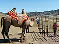 Leisure activity in Mongolia.jpg