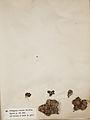 Lichenes Helvetici I II 1842 017.jpg